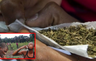 Nigeria becomes the highest marijuana consuming country in Africa